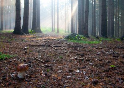 Vyražte do lesa!